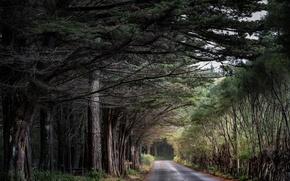 Обои природа, лес, дорога