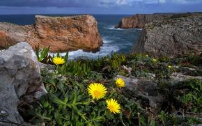 Картинка море, цветы, природа, скалы, Португалия