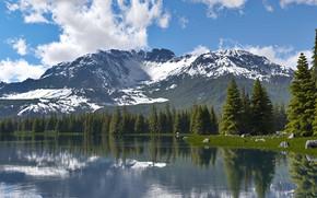 Картинка горы, природа, растительность, водоём, mount st.helens