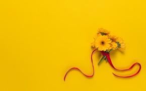 Обои цветы, фон, букет, лента, герберы