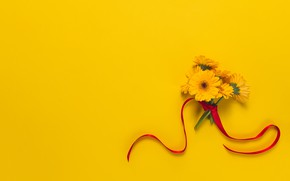 Картинка цветы, фон, букет, лента, герберы