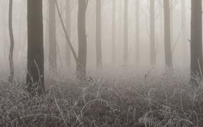 Картинка иней, деревья, туман