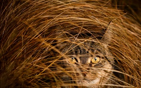 Картинка трава, глаза, кот, взгляд