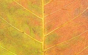 Картинка осень, желтый, лист, текстура