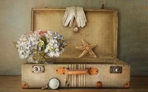 Картинка текстура, перчатки, чемодан, морская звезда, гортензия