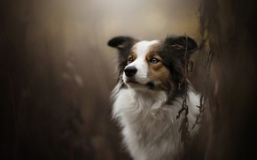Картинка собака, боке, Theia, Dog Photography