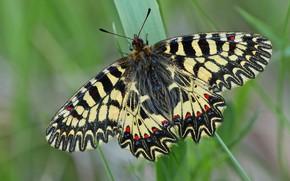 Картинка листья, макро, бабочки, насекомые, природа, фон, узор, бабочка, насекомое, размытый, пестрая