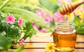 Картинка цветы, мед, банки