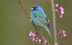 Картинка голубой, птица, ветка