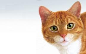 Обои минимализм, кот, Eric Tranchefeux, Pussy, рыжик