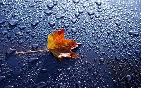 Обои макро, капли воды, вода, фон, кленовый лист, листик, капли