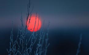 Картинка ночь, луна, красота, сибирь