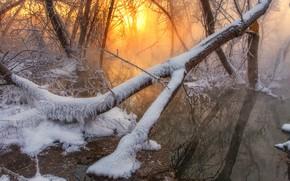 Картинка зима, лес, вода, солнце, снег, деревья, туман