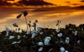 Обои природа, закат, цветы