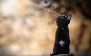 Обои боке, котенок, чёрный котёнок, бабочки