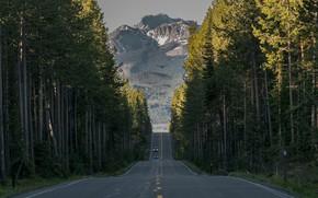 Картинка дорога, лес, деревья, горы, Вайоминг, Wyoming, Йеллоустонский национальный парк, Yellowstone National Park, Grand Teton National …