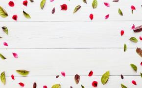 Картинка Листья, Лепестки, Текстура, Деревянный фон