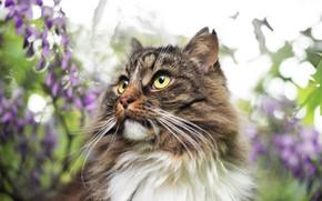Картинка кошка, кот, усы, взгляд, морда, листья, цветы, природа, серый, фон, портрет, размытие, весна, пушистый, сад, …