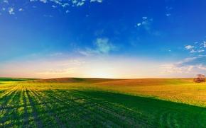 Картинка поле, небо, трава, солнце, простор