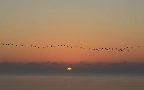 Картинка seascape, birds, sunrise