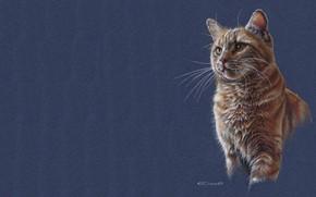 Картинка кошка, кот, рисунок, арт