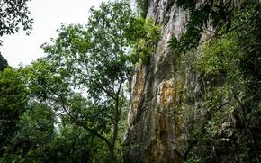 Картинка green, forest, nature, hill, sleeping, buddha, malaysia, lembing, sungai, sungai lembing