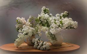 Картинка цветы, весна, натюрморт, спирея