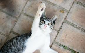 Картинка кот, котенок, играет