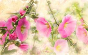 Картинка цветы, рисунок, графика, обработка, картина, сад, арт, розовые, живопись, нежно, легко, рисованные, мазки, цифровая живопись, …