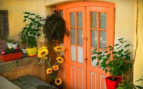 Картинка Цветы, Дверь, Растения, Двор, Горшки