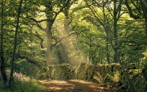 Обои лес, стена, лучи, деревья