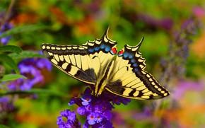 Картинка цветок, Макро, Бабочка, Macro, Butterfly