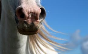 Картинка фон, конь, лошадь