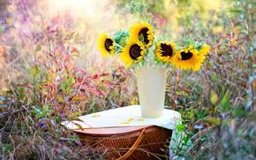 Картинка трава, подсолнухи, природа, корзина, ваза, боке