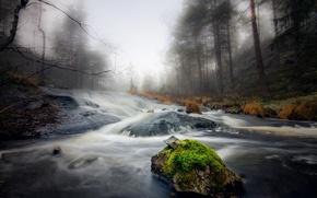 Картинка лес, туман, река