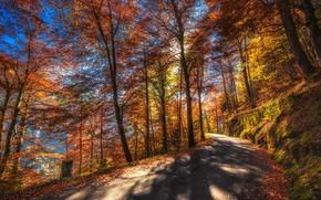 Картинка дорога, осень, лес, листья, солнце, деревья, горы, мох, Швейцария, склон, Canton of Berne, Thun