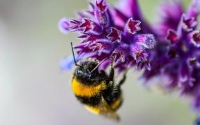 Обои цветок, пчела, макро, боке
