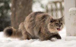 Обои язык, зима, кошка