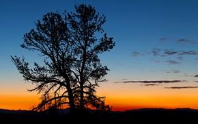 Картинка дерево, силуэт, Вайоминг, зарево, США