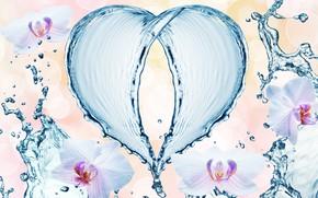 Обои брызги, капли, орхидеи, узор, сердце, вода, цветы