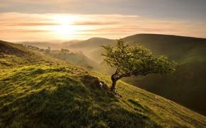 Обои свет, утро, дерево
