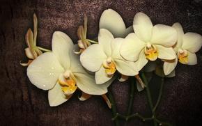 Картинка цветок, цветы, интерьер, flower, красивые, орхидея, flowers, beautiful, beauty, harmony, cool, bouquet, nice, elegantly, wedding, …