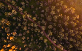Картинка лес, свет, деревья, вид сверху