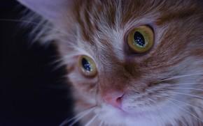 Картинка кошка, глаза, макро, портрет, мордочка, рыжая