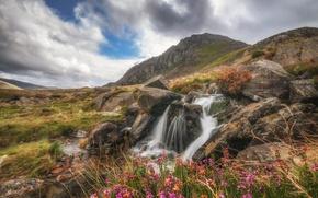 Картинка пейзаж, цветы, горы, ручей, камни, скалы, Уэльс