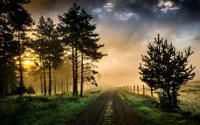 Картинка дорога, свет, природа, туман, утро