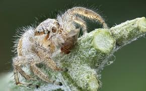 Картинка муха, жертва, паук, добыча