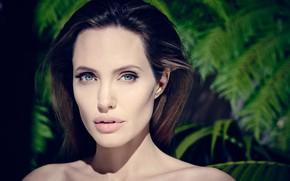 Картинка портрет, Angelina Jolie, знаменитость