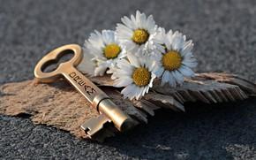 Картинка любовь, мечты, вместе, ключ, маргаритки