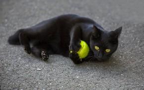 Обои взгляд, кот, мячик, глаза, черный